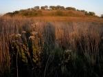 Pheasant Branch Conservancy,Middleton