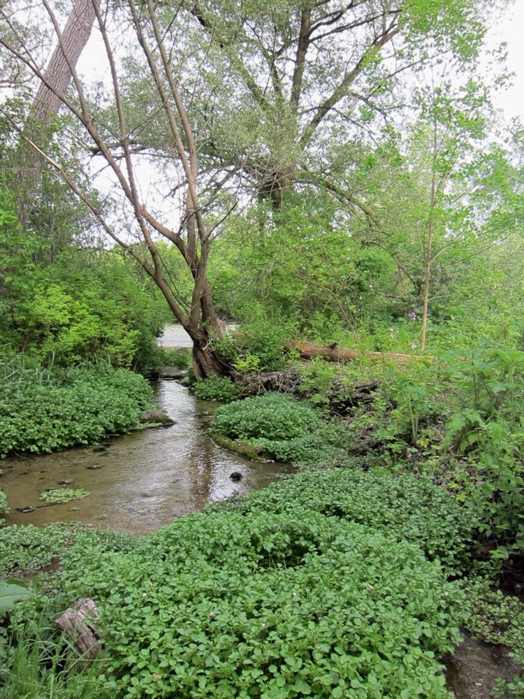 Sandhill Cranes Study Lake Wingra As >> Audio Unseen Madison